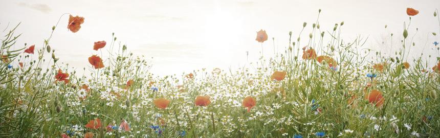Foto: © Gunnar Assmy - Fotolia.com